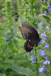Butterfly Visits by jeanbeanxoxo