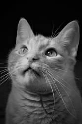 cat so curious