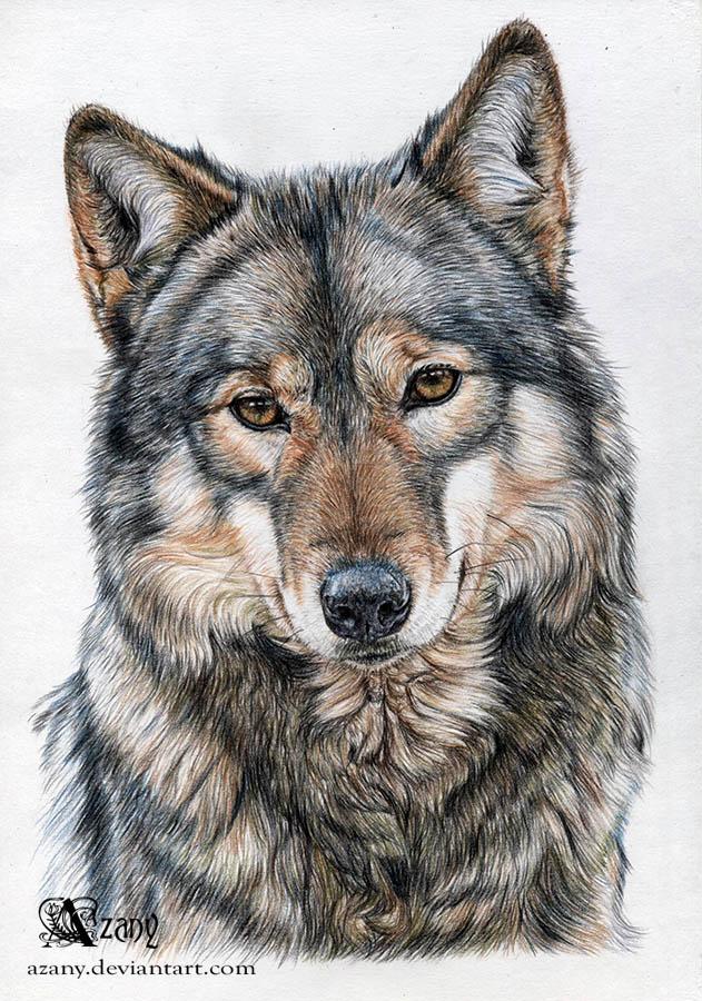 Волк картинки графика