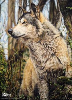 Wild Stark
