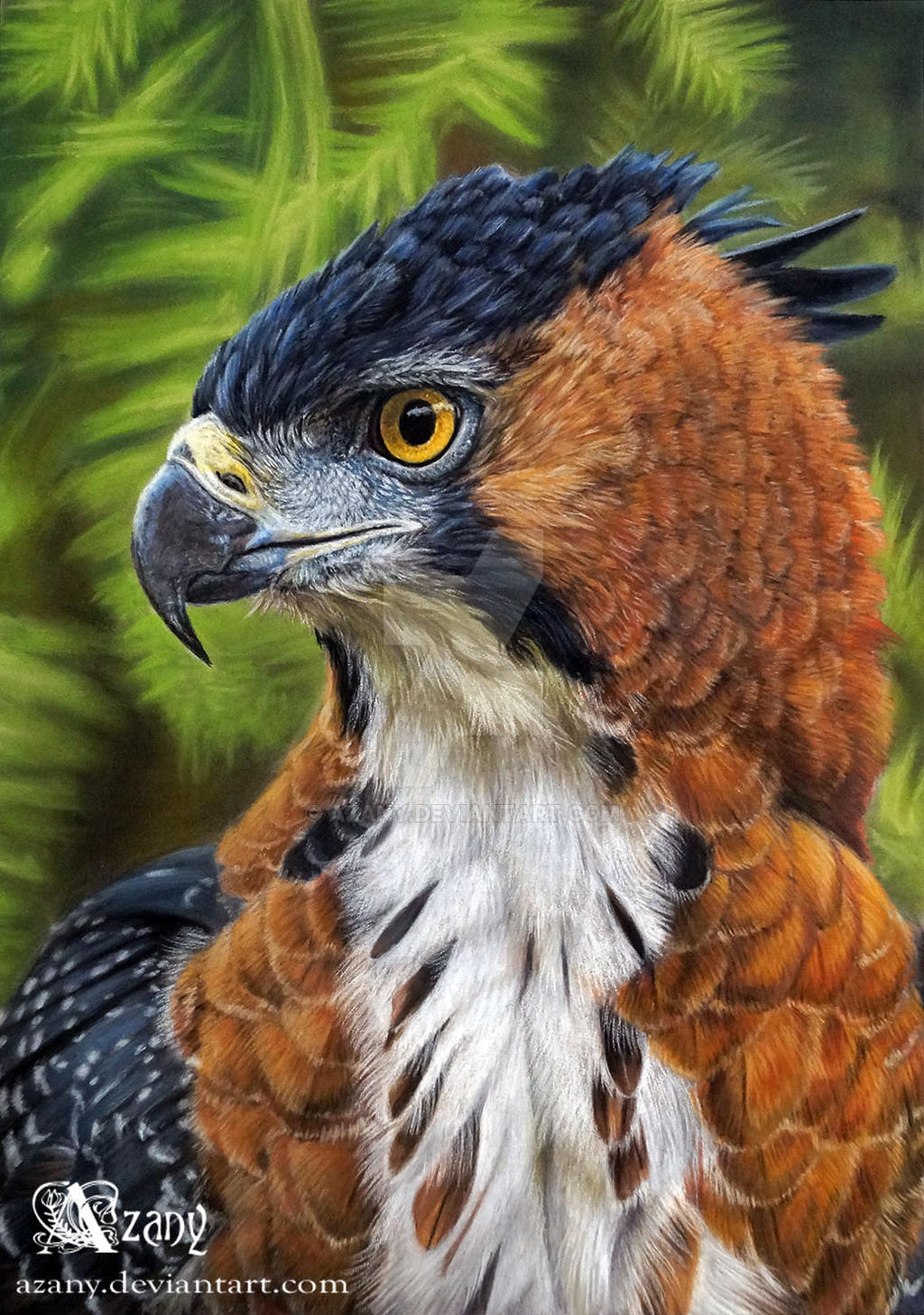 wallpaper birds hd