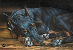 Doberman: black on black by Azany