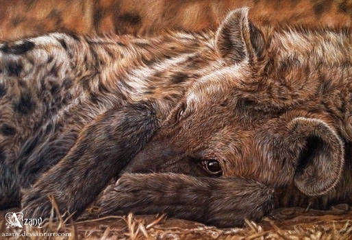 Shy hyena