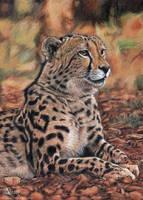 King cheetah by Azany