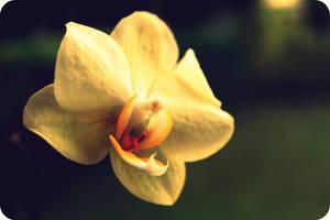 orchidee.....