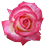 FREE TO USE: Rose Icon by OrigamiSoldier