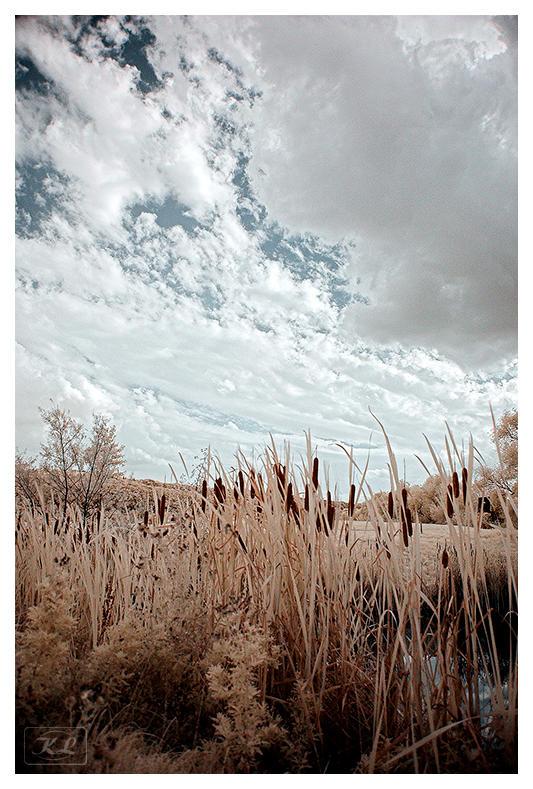Sea Of Sin by creativegrafix