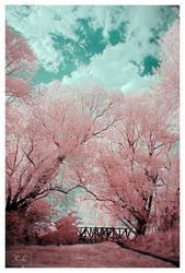 Dream On by creativegrafix