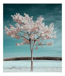 Lonely by creativegrafix