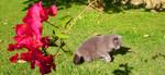 Flower Cat by FernandaNia