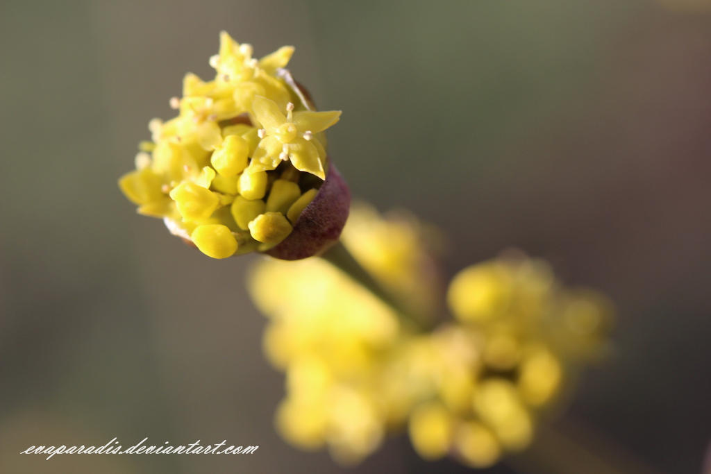 Soleil floral by EvaParadis