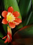 Broni's Flower