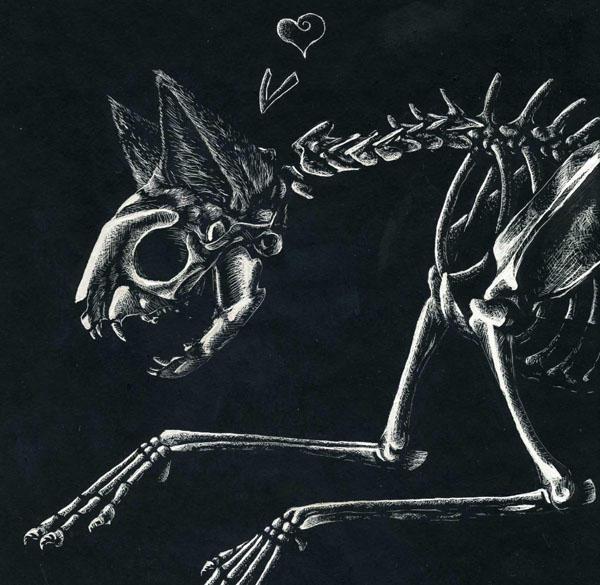 Cat Skeleton by ClickClack on DeviantArt