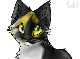 Smudgeh my cat 83 by Finchwing