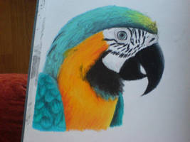 Oil pastel Parrot by Finchwing