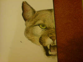 Oil Pastel Cougar by Finchwing