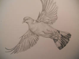 Pencil sketch - Pigeon by Finchwing