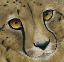 Wild eyes by Finchwing