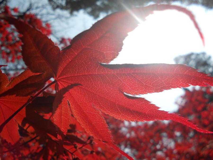 Sunlight on scarlet by Finchwing