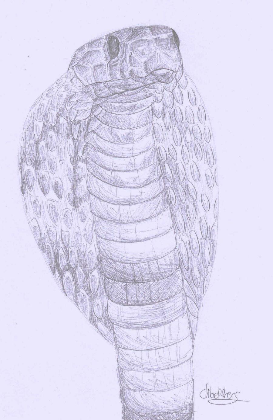 cobra pencil sketch by...