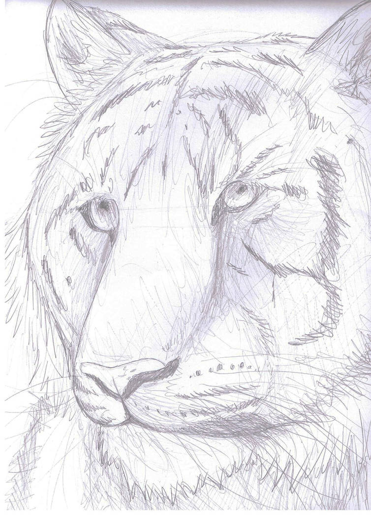 Tiger pencil sketch by finchwing