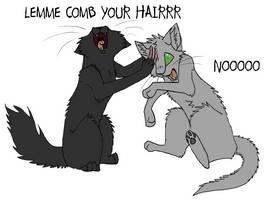Professional hairdresser