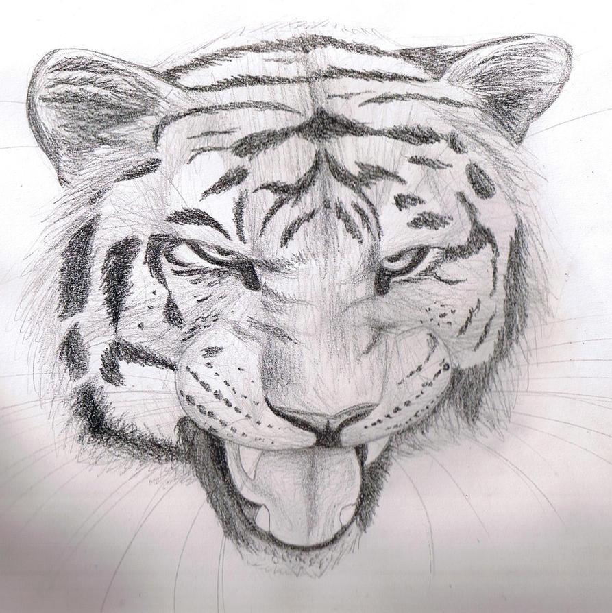 Pencil sketch - Tiger by Finchwing on DeviantArt