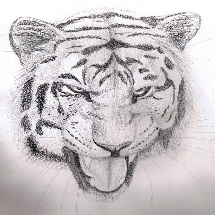 Pencil sketch tiger by finchwing