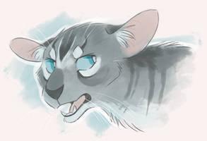 Grumpy Jay by Finchwing
