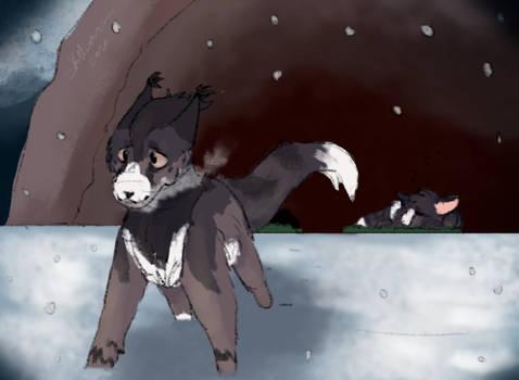 COTV | Lost Kitten
