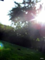 Sunlight by velikse