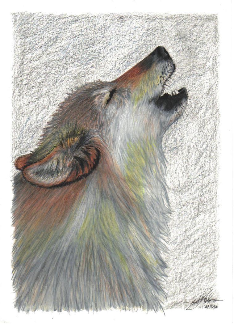 Lone Wolf by nktheawsome
