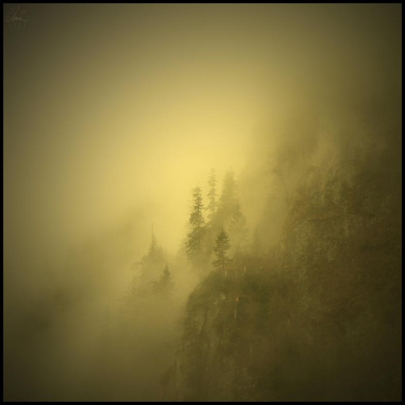 Fog awaits by DianaCretu