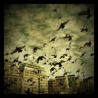 Wings in motion by DianaCretu