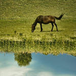 Greener on the other side by DianaCretu