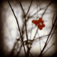 Saw red by DianaCretu