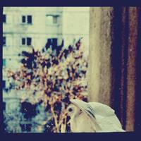 Leaving by DianaCretu