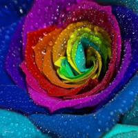 Rainbow by DianaCretu