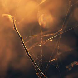 Fragments by DianaCretu