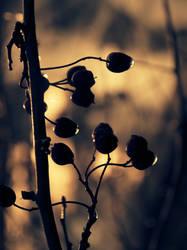 Tentacles by DianaCretu