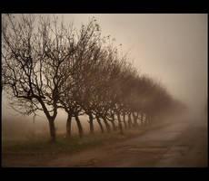 The silent by DianaCretu