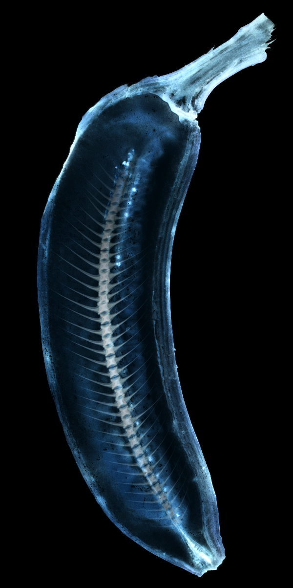 X ray banana by andfoy on deviantart for X ray painting