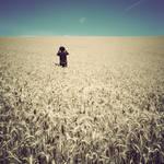 field of wheeeat