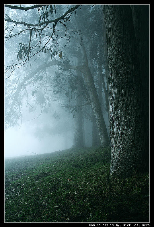polipoli:trees.inthe.mist:1 by nick-d