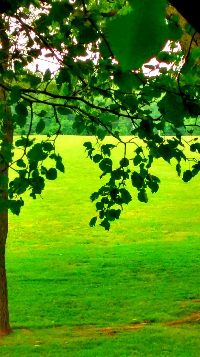 treetop veiw by Innessen