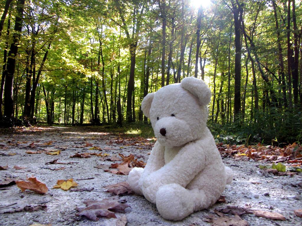 Lonely Bear in the Woods by kilroyart