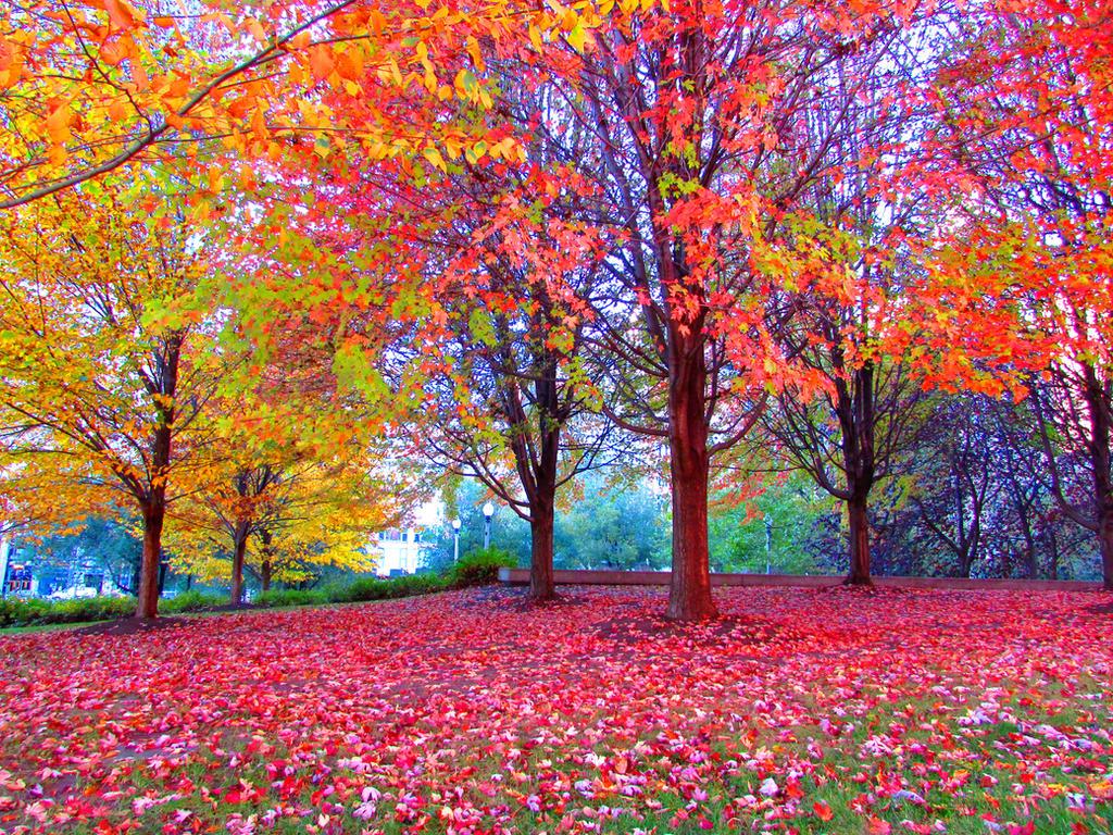 Beautiful Fall Season by kilroyart