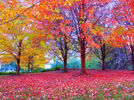 Beautiful Fall Season