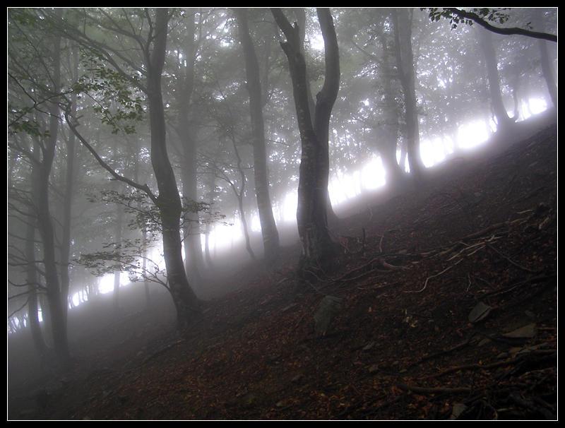 Woods I by deedee20382