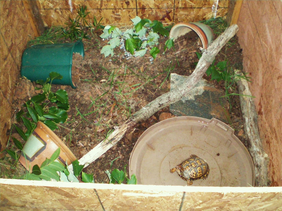 Outdoor Box Turtle Enclosure By Sneaky Snake Designs On